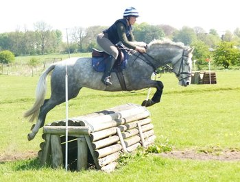 IRISH SPORT HORSE WITH THE ABILITY TO EXCEL IN ANY SPHERE!
