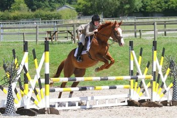 SUPER THOROUGHBRED MARE
