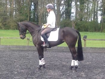 GABRIELLE- ATTRACTIVE SMALL EVENT HORSE
