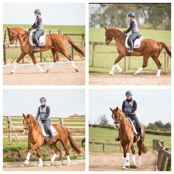 'DELILAH', TALENTED & SUPER SAFE 2013 MARE