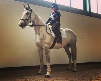 BEAUTIFUL 15.2HH IRISH SPORTS HORSE