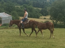 Drywood Diamond Lena & Yearling Filly - 15hh Ridden Chestnut Mare...