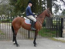 Eventers horse - 6 yrs 16.0 hh Bay - Lanarkshire