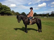 Betty 13. 3hh Dales/fell Mare