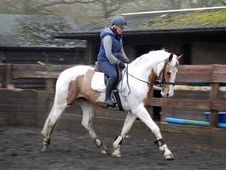 Lovely 15. 2HH rc or eventer