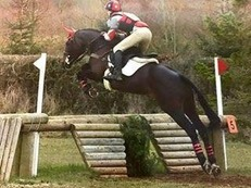Ultimate Eventer/Show Jumper