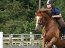 All Rounder horse - 14 yrs 4 mths 16.3 hh Chestnut - West Sussex
