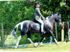 13. 1hh Honest allround pony