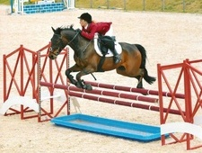 All Rounder horse - 10 yrs 15.2 hh Bay - Essex