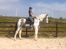 ** STUNNING TALENTED IRISH SPORTS HORSE, 16. 2hh **