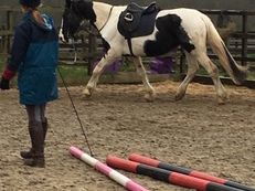 16.2 piebald mare looking for sharer.