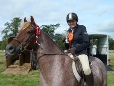 All Rounder horse - 5 yrs 11 mths 14.3 hh Strawberry Roan - Leice...