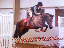 All Rounder horse - 13 yrs 13.2 hh Liver Chestnut - Northamptonshire
