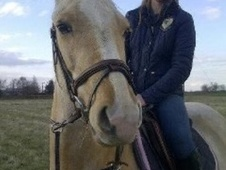 All Rounder horse - 6 yrs 14.1 hh Palomino - North Yorkshire