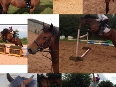 Perfect Jumping 13. 2 Mare