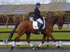 Talented allrounder super competition horse