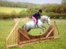 Pony Club Ponies horse - 5 yrs 12.2 hh Grey - North Yorkshire