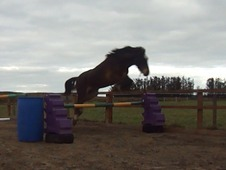 Super Jumping Prospect