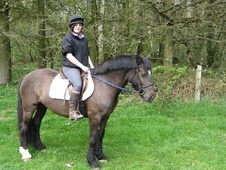 All Rounder horse - 5 yrs 14.1 hh Bay - Warwickshire