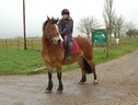 All Rounder horse - 14 yrs 10 mths 14.1 hh Bay - South Yorkshire