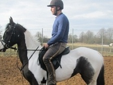 Riding Club Horses/Ponies horse - 4 yrs 4 mths 14.1 hh Piebald - ...