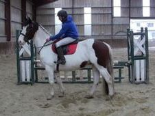 All Rounder horse - 7 yrs 15.3 hh  - Laois