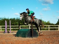 Quality Allrounder 15. 3hh