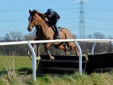 Allrounder/Rc horse/eventer for sale