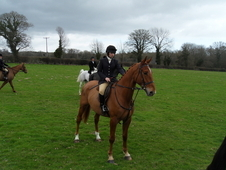 17. 1hh Hunter For Sale