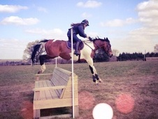 All Rounder horse - 7 yrs 16.0 hh Tri-Coloured - West Sussex