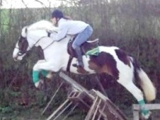 All Rounder horse - 4 yrs 6 mths 14.1 hh Skewbald - West Midlands