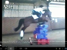 All Rounder horse - 8 yrs 14.1 hh Bay - Gloucestershire