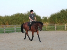 Vinnie 16. 1, Bay, Gelding, 7 Years (2007)
