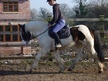 All Rounder horse - 9 yrs 14.2 hh Coloured - Cheshire
