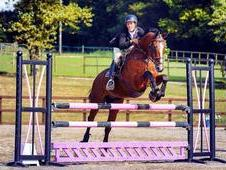 Stunning Competiton Horse *******reduced £3800*****