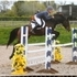 Serious future show jumper