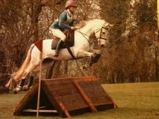 Mountain & Moorland horse - 10 yrs 14.1 hh Grey - West Sussex