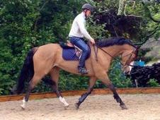 All Rounder Horse - 8 Yrs 15. 3 Hh - Kent