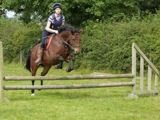 All Rounder horse - 14 yrs 14.1 hh Bright Bay - Clwyd