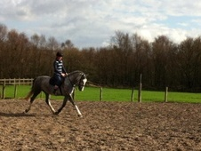 All Rounder horse - 4 yrs 3 mths 15.2 hh Grey - Lancashire