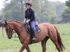 Riding Club Horses/Ponies horse - 6 yrs 15.2 hh Chestnut - Berkshire