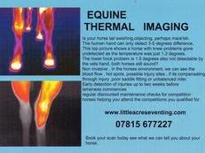 equine thermal imaging , midlands area