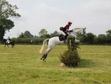 All Rounder horse - 17 yrs 16.1 hh Grey - Wiltshire