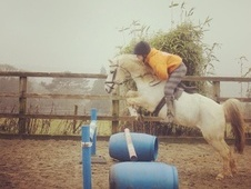 Ideal pony club pony -Section B, 12.1hh 17 yrs 11 mth - East Sussex