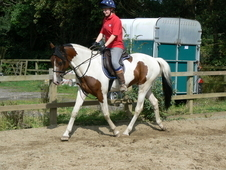 Future All-rounder Coloured Sports Horse