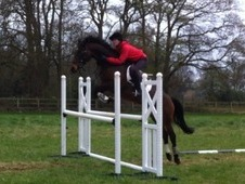 Born to jump! ! Extremely bold & talented little mare.