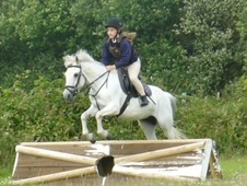 All Rounder horse - 19 yrs 12.2 hh Grey - East Sussex