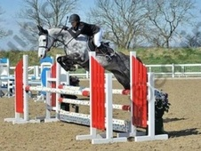 Show Jumpers horse - 8 yrs 1 mth 16.1 hh Grey - Kent