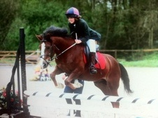 Family horse - 8 yrs 13.3 hh Chestnut - Kent