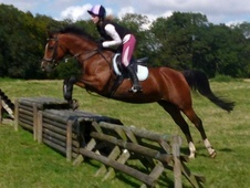 All Rounder horse - 11 yrs 6 mths 14.2 hh Bright Bay - Cambridges...
